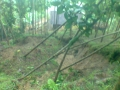 140113 Slides near Kusnadi's house