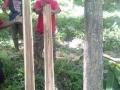 140329 Teak is a decoratif wood
