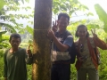 140503 Teaks planted 2007 with diameter 30 cm