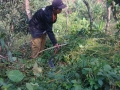 140508 Clearing grass at Mango area 3