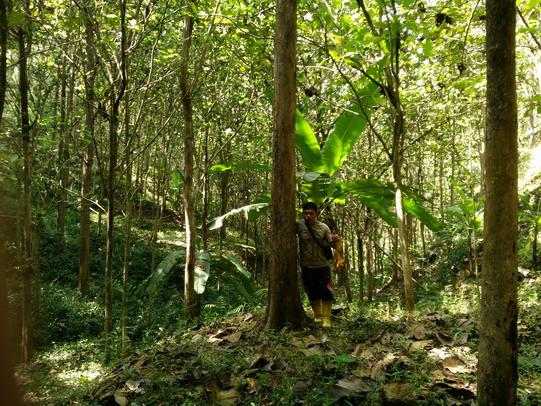 Edu in Bumisari plantation